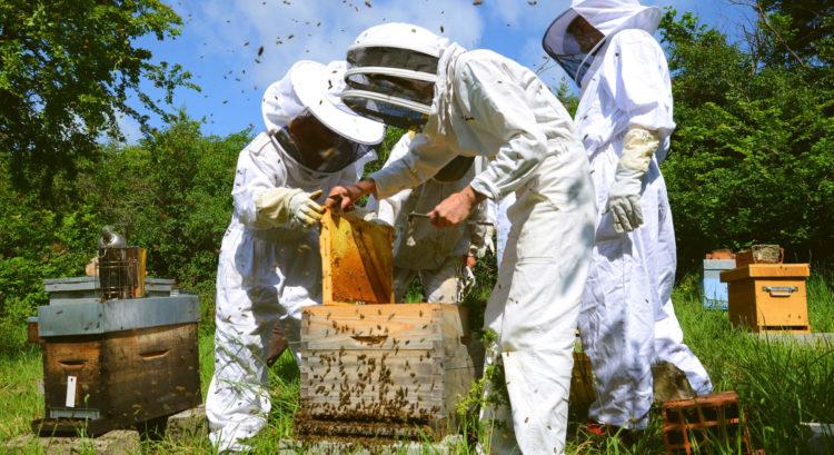 Formez vous en apiculture, de l'initiation au perfectionnement