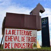 Retour des néonicotinoïdes en France