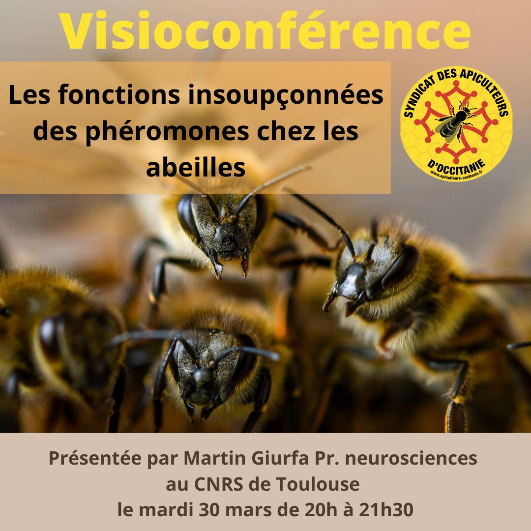 Visioconférence : Les fonctions insoupçonnées des phéromones chez les abeilles